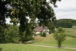 Ristsimonhof